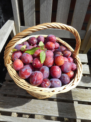 Foraged plums