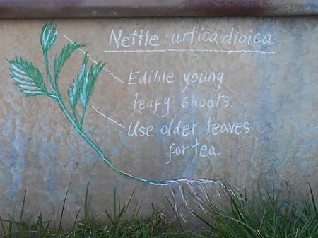 Nettle detail