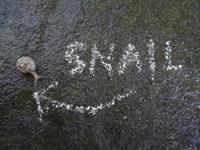 Snail thumbnail
